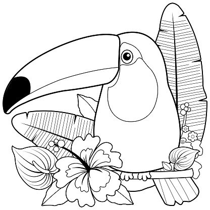 Toucan bird and exotic plants and flowers. Vector black and white coloring page