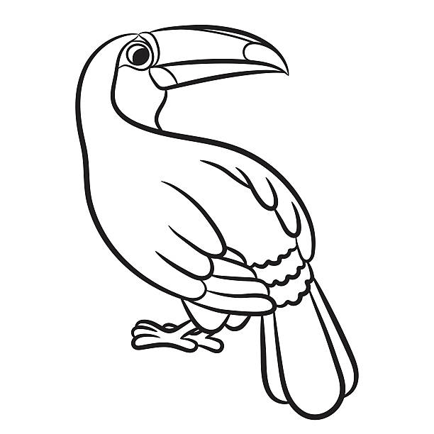 Best Toco Toucan Illustrations, Royalty-Free Vector ...