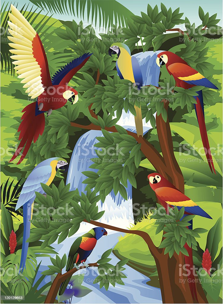 Toucan bird in the tropical jungle royalty-free stock vector art