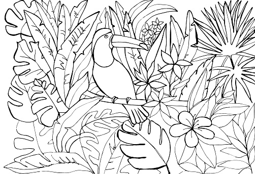 A toucan bird sitting on a branch in a tropical forest among palm trees, lianas and  leaves. Vector illustration. Freehand sketch for anti-stress coloring, postcard, print, background, book, game