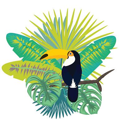 Toucan bird vector illustration for tshirt apparel design.