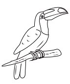 Toucan - coloring