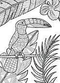 Toucan illustration.