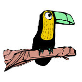 Toucan on a tree hand drawn color