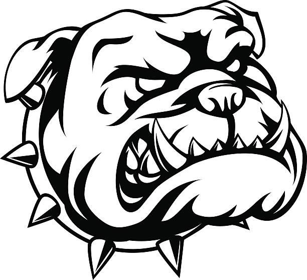 Best Bulldog Illustrations, Royalty-Free Vector Graphics