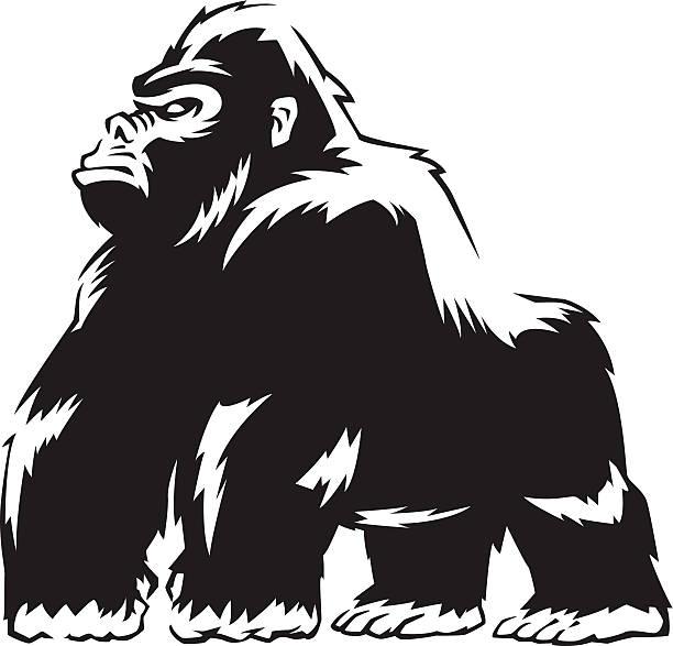 robuste gorilla - gorilla stock-grafiken, -clipart, -cartoons und -symbole