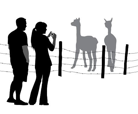 Tourist Picture Llamas