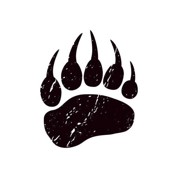 A trace a bear. White silhouette of paw. A trace a bear. White silhouette of paw on a black background. Vector. The imprint of a bear s foot. Logo of the footprint. paw stock illustrations
