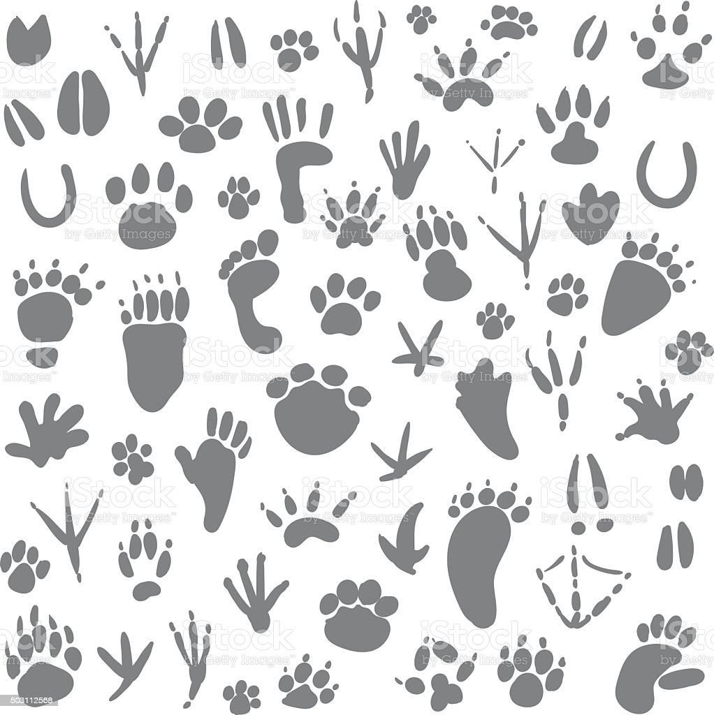Traces of animals vector art illustration