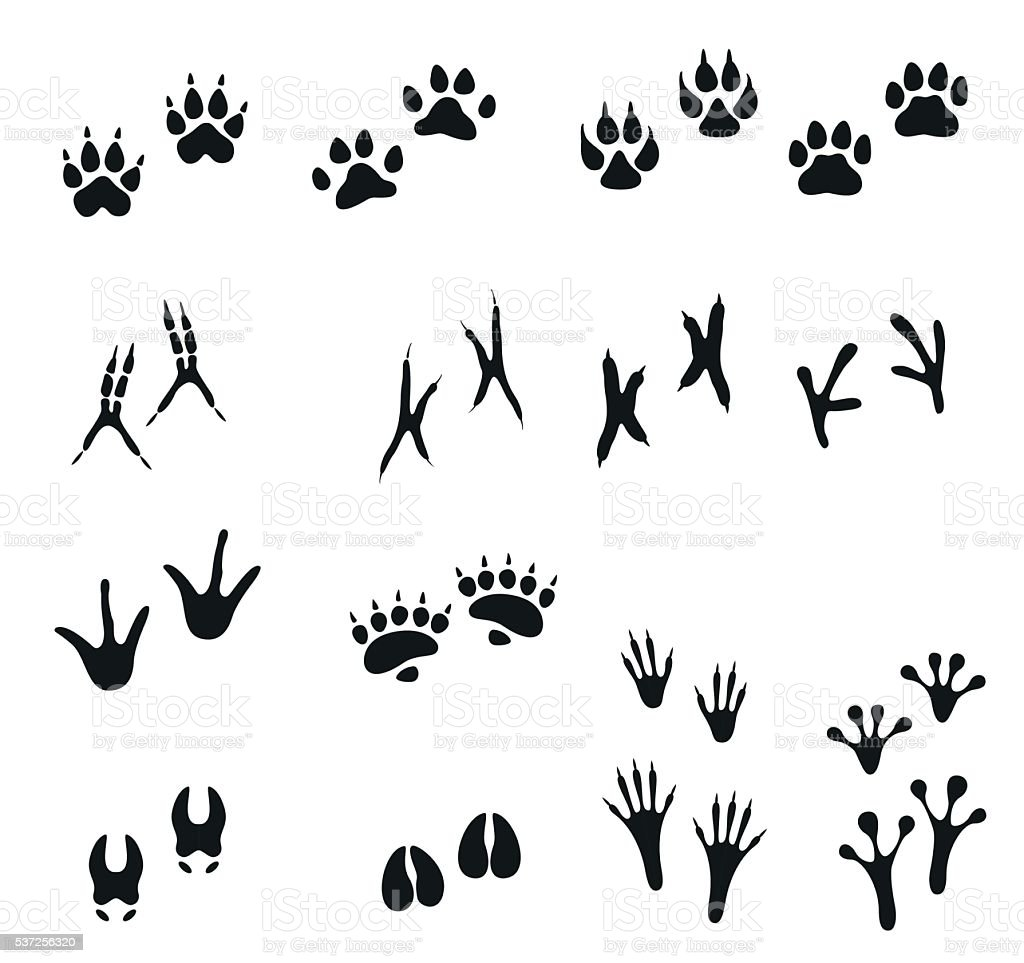 Tracks of wild animals and birds. Paw print. vector art illustration