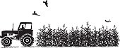 Agriculture silhouette. Tractor and corn field ready for the harvest. Silhouette is done in black and white. Farmer sitting in tractor beside corn field ready to harvest the field. Birds flying over corn crop.