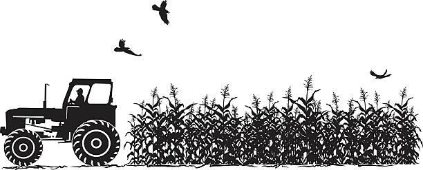 bildbanksillustrationer, clip art samt tecknat material och ikoner med tractor and corn field agriculture silhouette isolated on white - traktor pulling