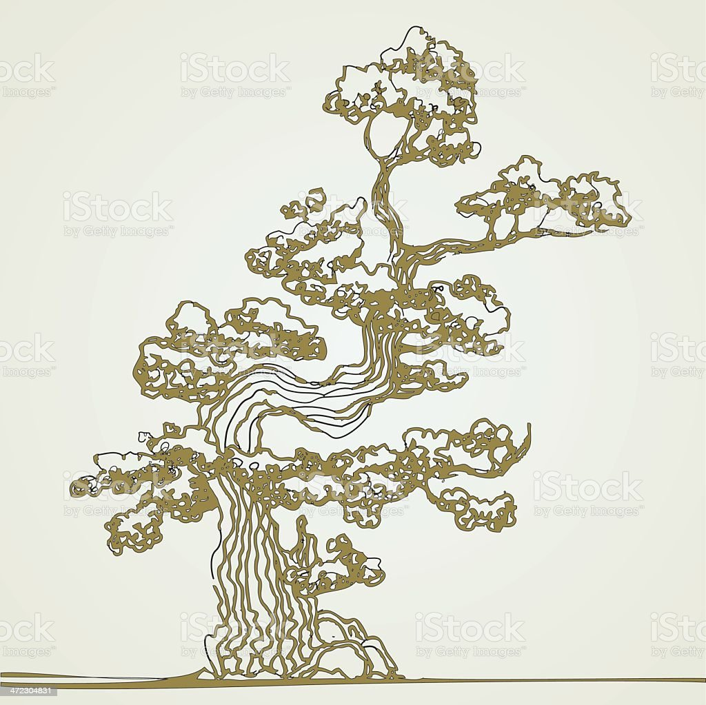 Traditionelle bonsai. – Vektorgrafik