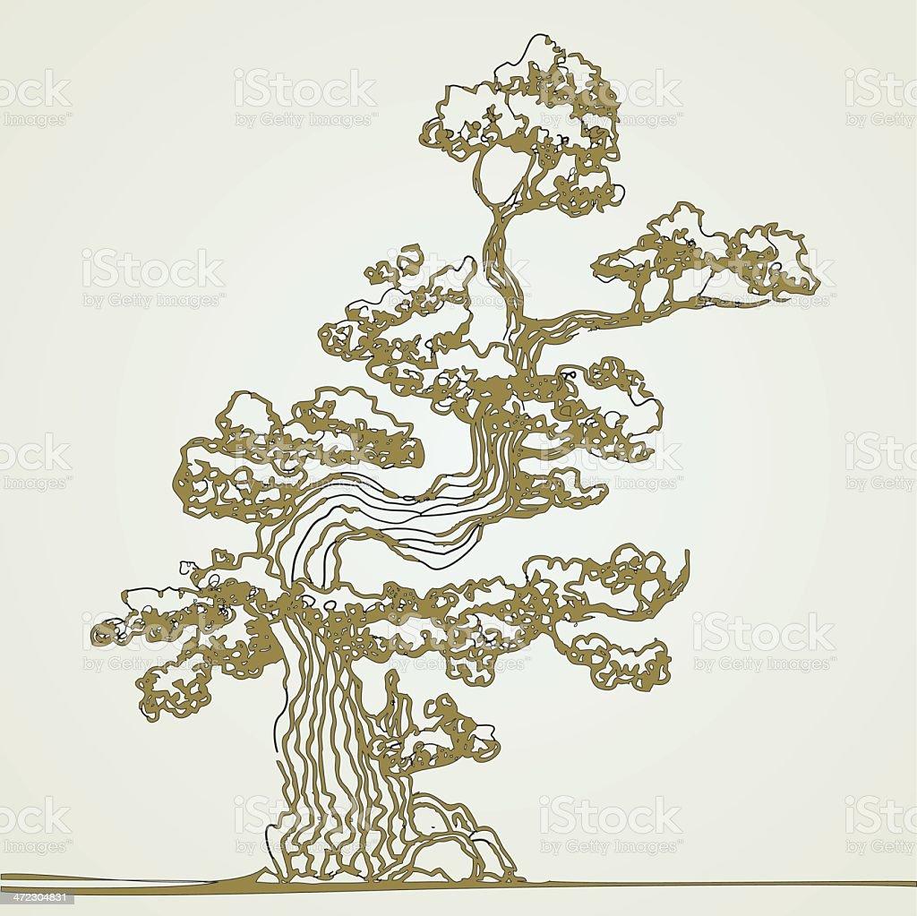 Traditional bonsai tree. vector art illustration