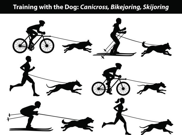 ausbildung ausübung mit hund: canicross, bikejoring, skijöring silhouetten eingestellt - langstreckenlauf stock-grafiken, -clipart, -cartoons und -symbole