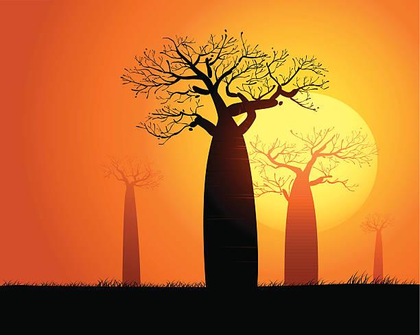 Tranquilo paisaje al atardecer en Madagascar - ilustración de arte vectorial