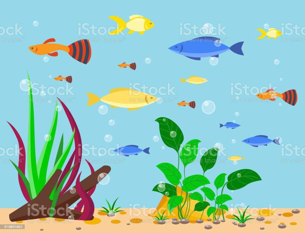 underwater fish background gallery