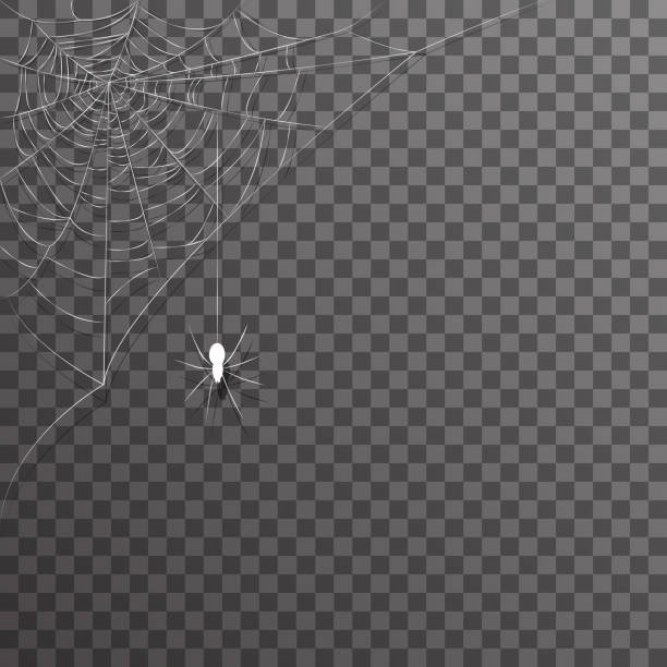 Transparent background corner decoration hanging spider web halloween vector illustration Transparent background corner hanging decoration spider web halloween vector illustration backgrounds clipart stock illustrations