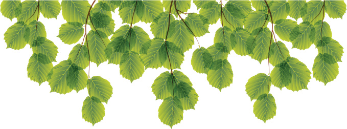 Transparent Green leaf