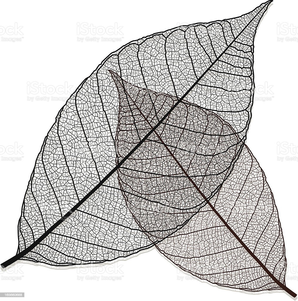 Transparent Leaf vector art illustration