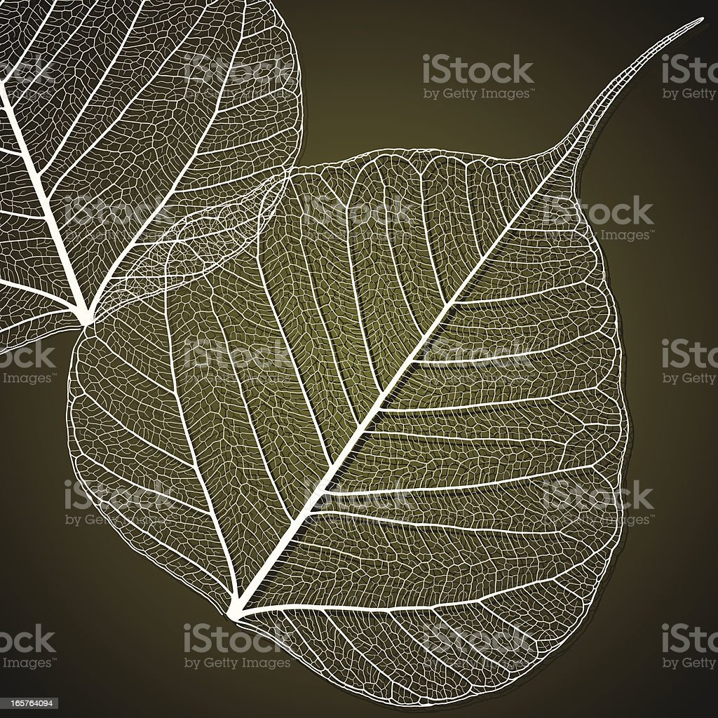 Transparent Linden Leaf vector art illustration