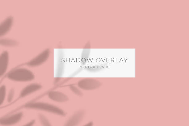 Transparent shadow overlay effect for branding. Drop shadow from the branches of plant on flat surface. Background for your design. Vector eps 10. vector art illustration