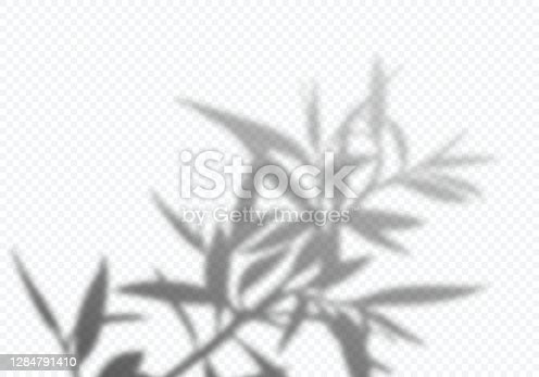 istock Transparent Vector Shadow of Tree Leaves. Decorative Design Element for Posters and Mockups. Creative Overlay Effect 1284791410