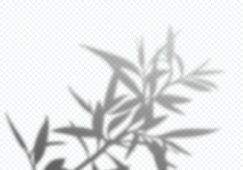 Transparent Vector Shadow of Tree Leaves. Decorative Design Element for Posters and Mockups. Creative Overlay Effect