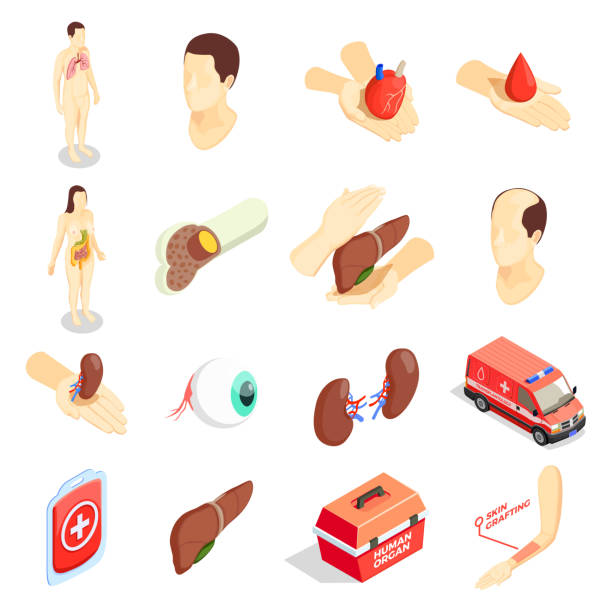 transplantation donor isometric icons Transplantation decorative icons set with human  organs emergency car case for transportation donor organs isometric vector illustration bone marrow tissue stock illustrations