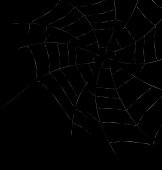 Trap Spider Web on Dark Background for Design Web or Nature concept - vector