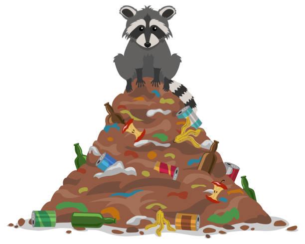 stockillustraties, clipart, cartoons en iconen met trash wasbeer - aas eten