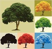 Tree, 4 seasons