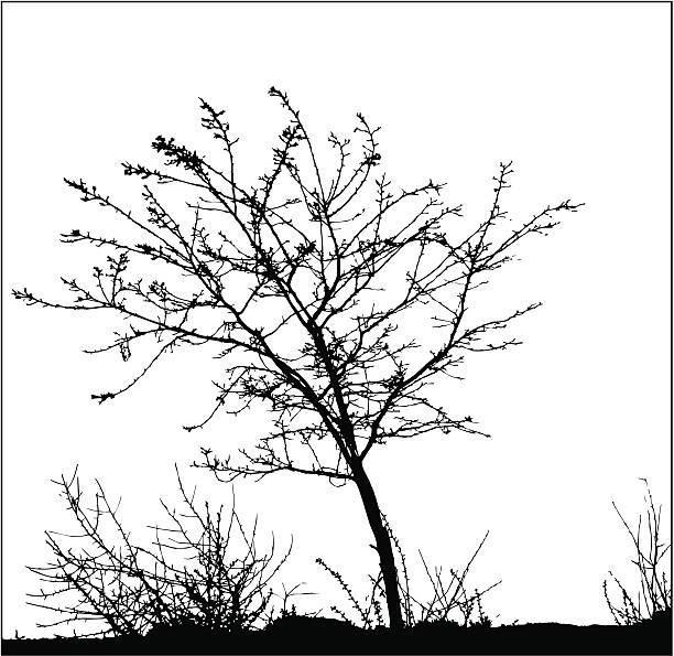 ilustrações, clipart, desenhos animados e ícones de árvores e grama/vetores - composição