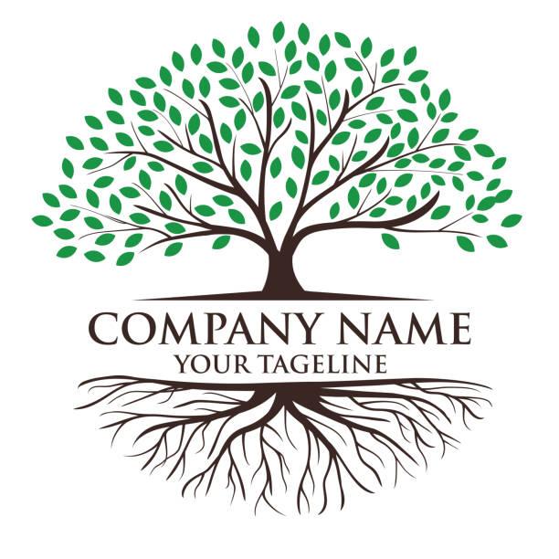 ilustraciones, imágenes clip art, dibujos animados e iconos de stock de ilustración del logotipo de árboles y raíces. inspiración en el diseño del logotipo del árbol de la vida - árbol