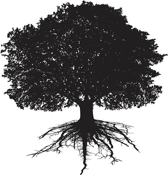 Tree and roots Tree and roots origins stock illustrations