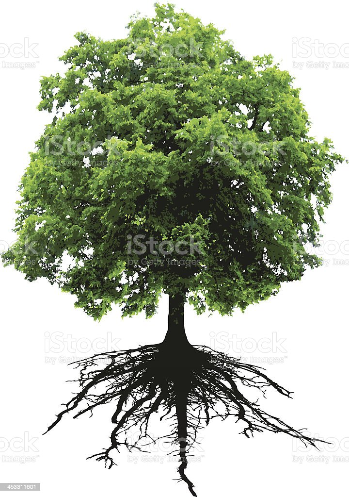 Tree and roots vector art illustration