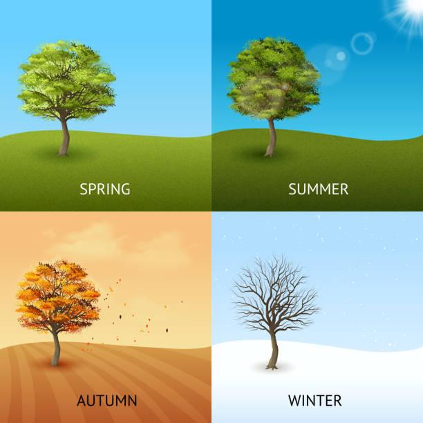 banery drzew - four seasons stock illustrations