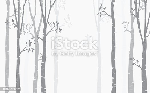 Tree Birch Background