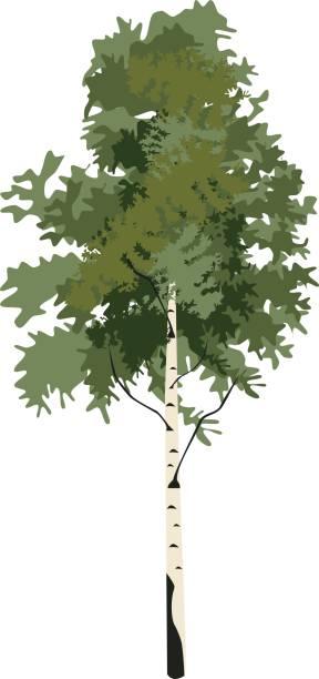 bildbanksillustrationer, clip art samt tecknat material och ikoner med tree björk clipart - summer sweden