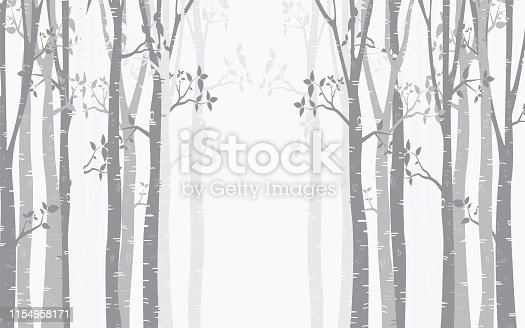 Tree Birch design Background with birch forest vector