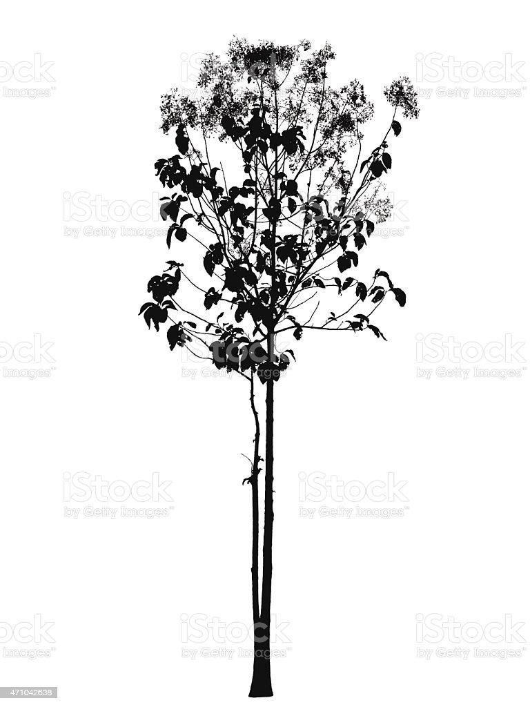 Tree blossom silhouette : vector vector art illustration