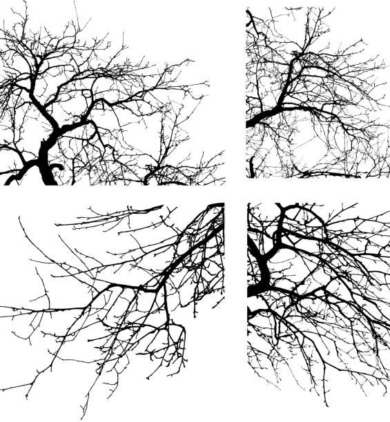 drzewo gałąź - gałąź część rośliny stock illustrations