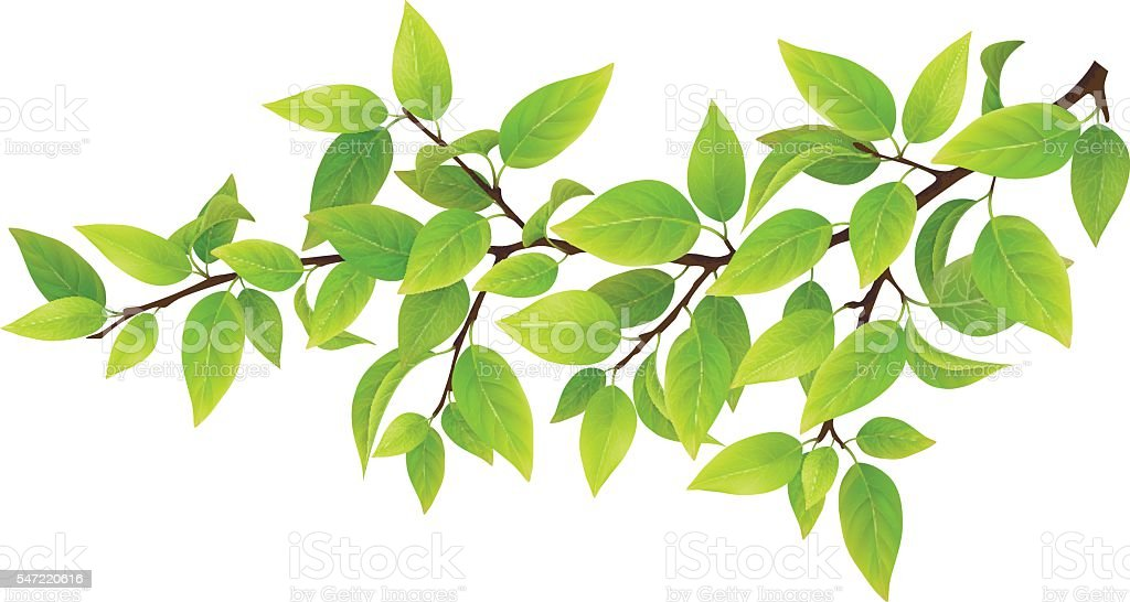 Tree branch with green leaves vector art illustration