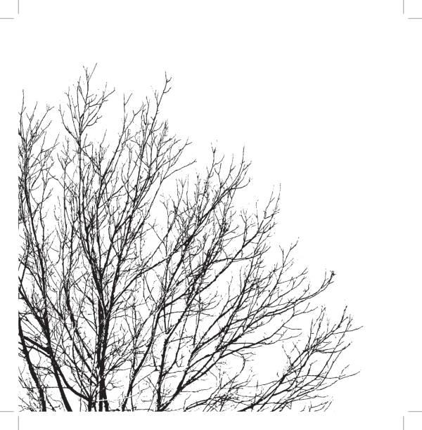 tło gałęzi drzewa - gałąź część rośliny stock illustrations