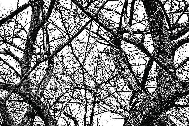 drzewo gałęzie tle - wood texture stock illustrations