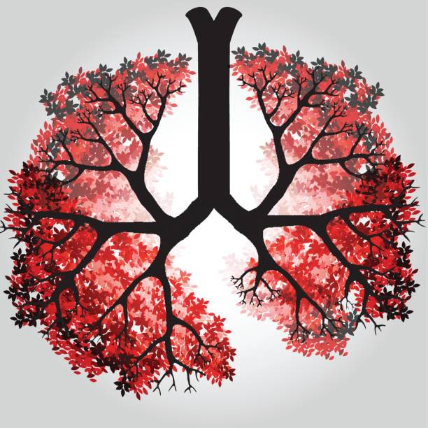 Tree Branches Like Lungs - Vector Illustration Tree Branches Like Lungs - Vector Illustration respiratory tract stock illustrations