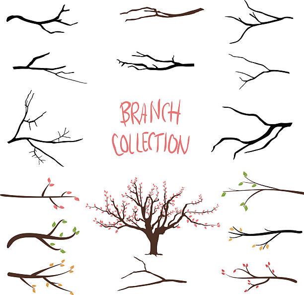 drzewo gałęzie - gałąź część rośliny stock illustrations