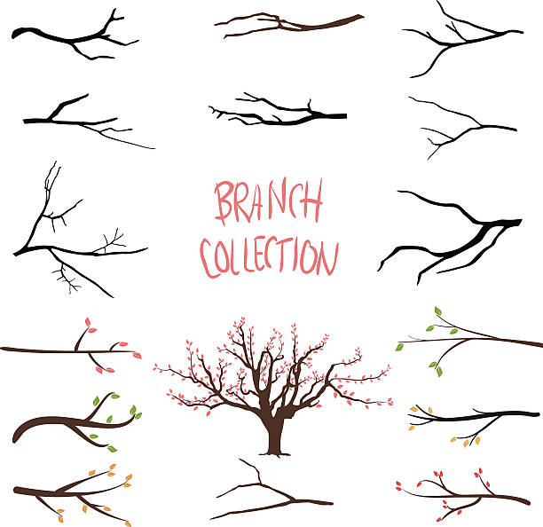 Tree branches Tree branches branch plant part stock illustrations