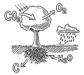 Hand-drawn vector drawing of a Tree Carbon Dioxide Absorption Infographic. Black-and-White sketch on a transparent background (.eps-file). Included files are EPS (v10) and Hi-Res JPG.