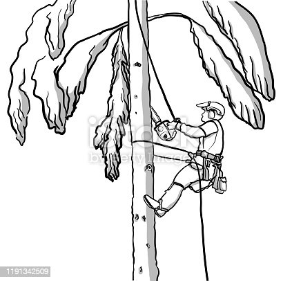 Tree climber half way up a tree and carrying a chainsaw in order to cut more of the large branches around him. Hand drawn vector illustration